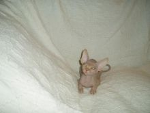 Super Pretty Canadian Sphynx kittens for adoption