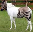 Well tamed horse ready for a ride in your home.(604) 245-4480