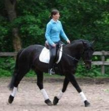 Friesian Horse Available For New Homes.text/call (604) 245-4480