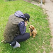 Beautiful male and female Cavapoo puppies